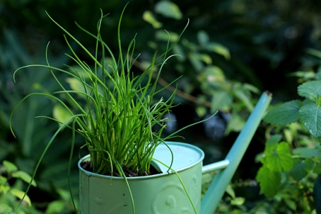 Upcycled-watering-can-5
